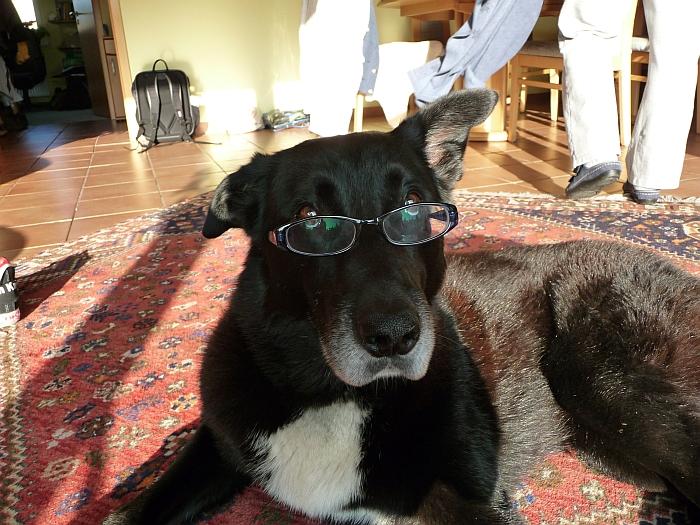 Paul muss seine Brille …